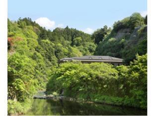 모치노키 image