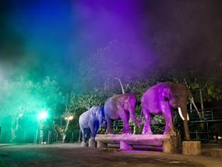 Elephant Safari Park Lodge Hotel Bali - Elephant Night Show