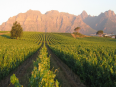Three Cities Kleine Zalze Lodge Stellenbosch - Omgivningar