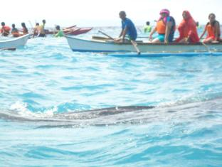 Bonita Oasis Beach Resort Cebu - Whale shark watching at Oslob