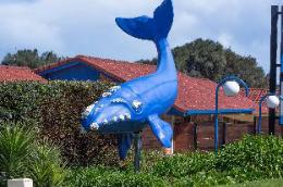 Blue Whale Motor Inn & Apartments