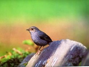 Royal Park Hotel Chitwan - Bird Watching Activity