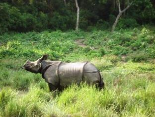 Royal Park Hotel Chitwan - Rhino sighting during Elephant-back Safari