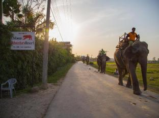 Chitwan Adventure Resort Chitwan - Elephants passing by the entry gate