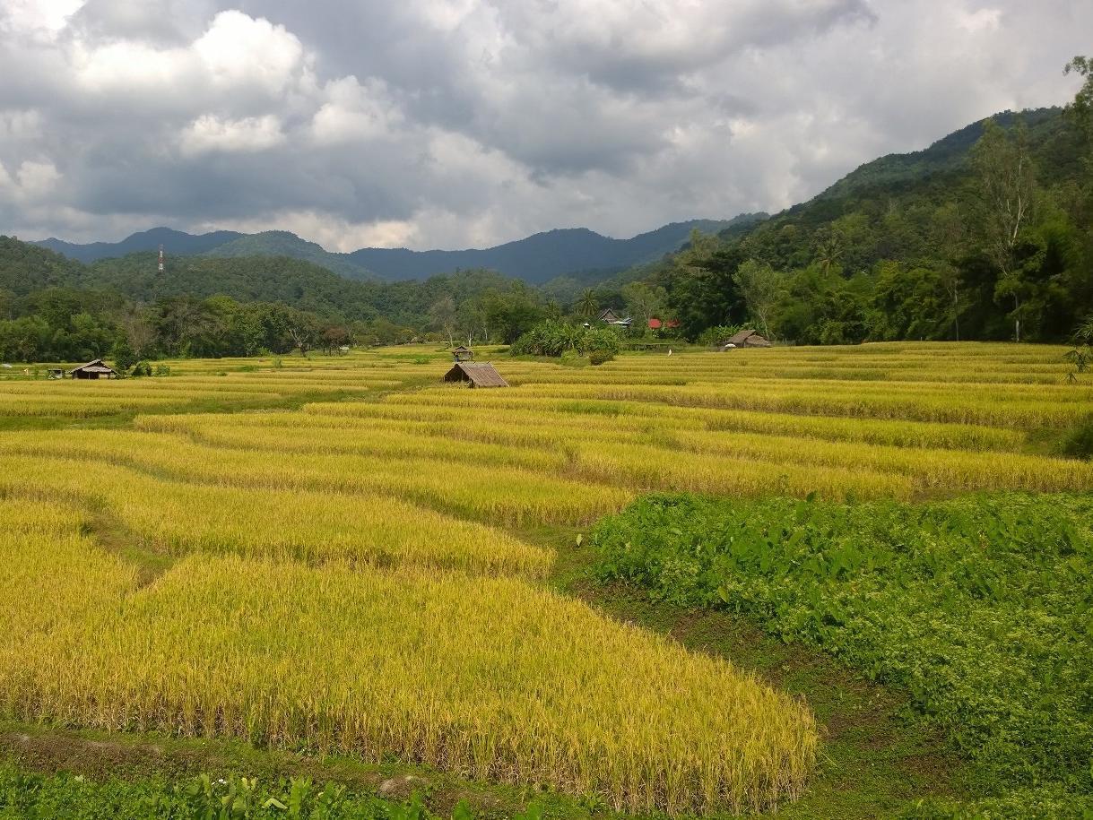 布伦布里清迈度假村,บุหลันบุรี เชียงใหม่ รีสอร์ต