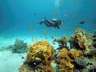 Sibu Island Resort Mersing - Diving