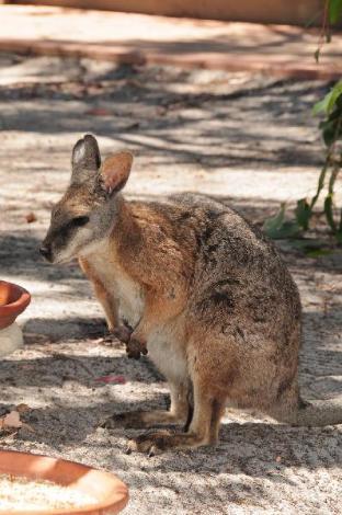 Hotell Kangaroo Island Wilderness Retreat Resort  i Kangaroo Island, Australien