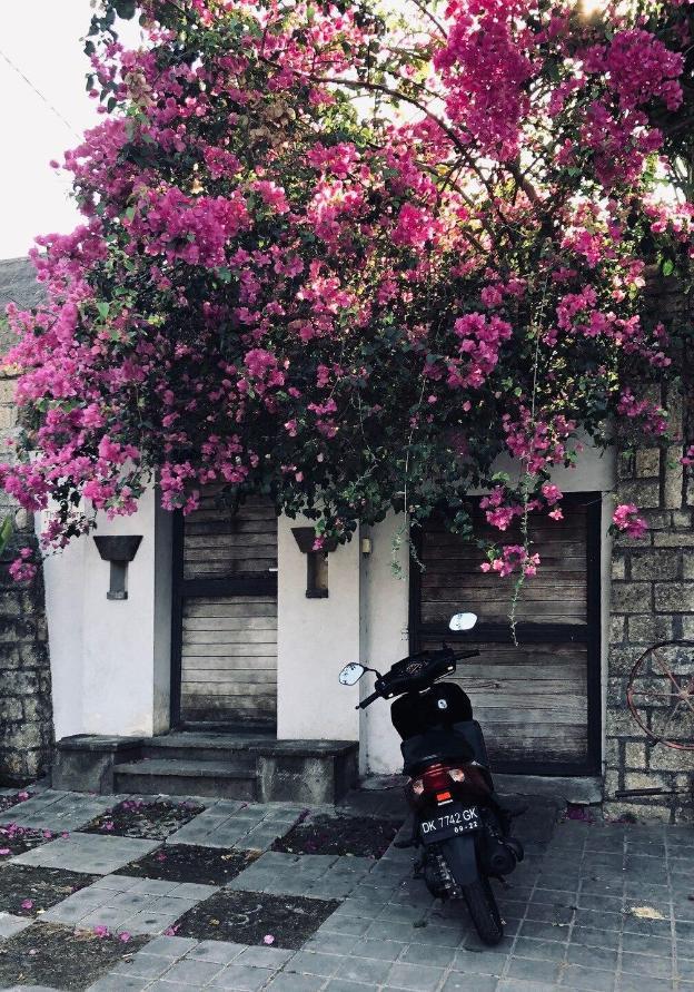 Stylish 1 BR Villa ✶ Lush Garden Oasis ✶ Seminyak