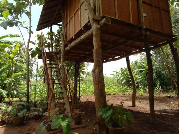 Sigiri Aliya Tree House Sigiriya Sri Lanka Great
