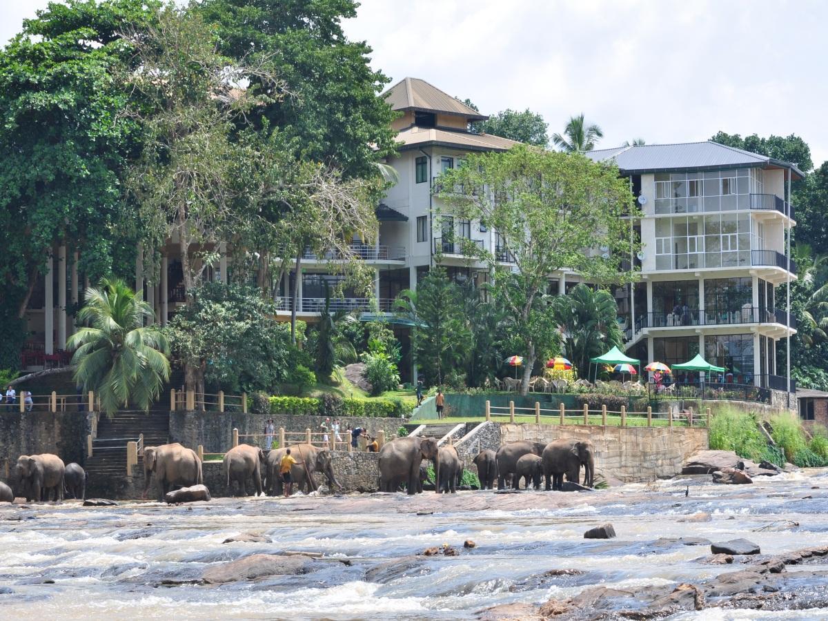 Hotel Elephant Bay