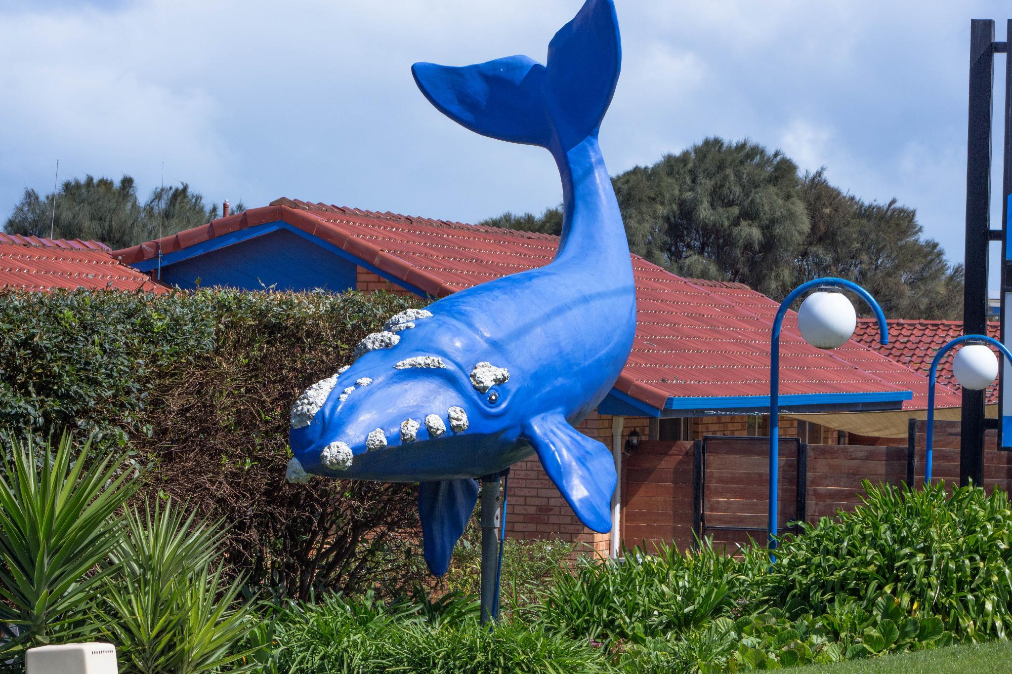 Blue Whale Motor Inn And Apartments