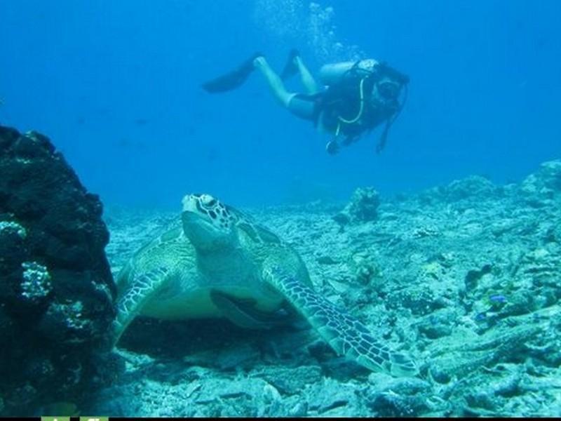 Aquaddiction Dive And Bungalows