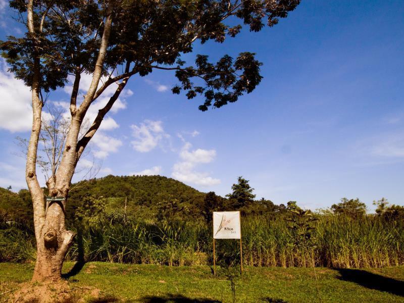 Canary Natural Resort คะแนรี่ เนเชอรัล รีสอร์ท