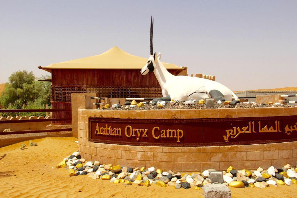Arabian Oryx Camp 1