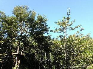picture 4 of Camp Alfredo Adventure Resort