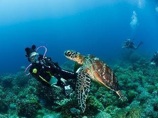picture 3 of Acqua Dive Resort