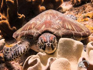 picture 4 of Acqua Dive Resort