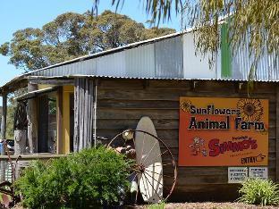 Sunflowers Animal Farm and Farmstay Guest House