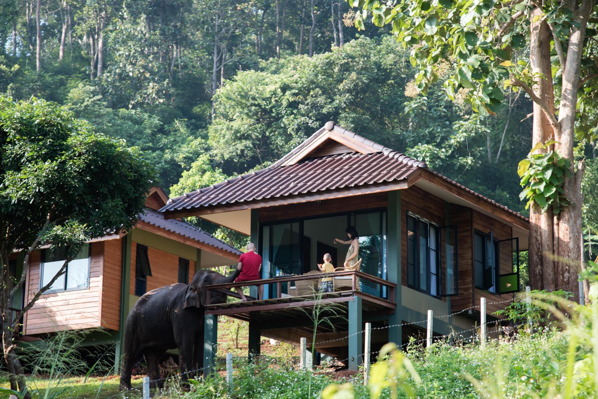 Chiang Mai Elephant Friends