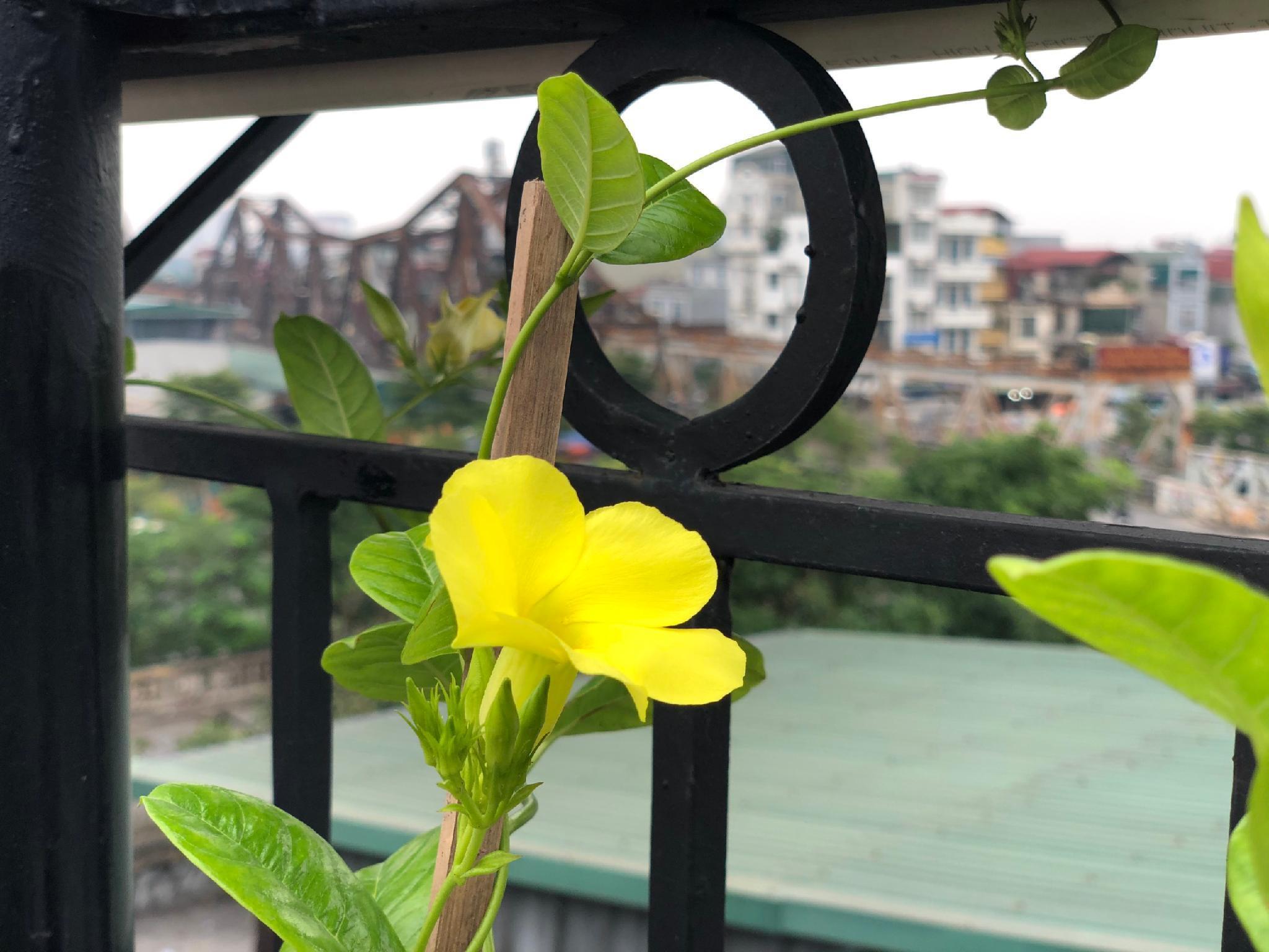 Hanoi Great View