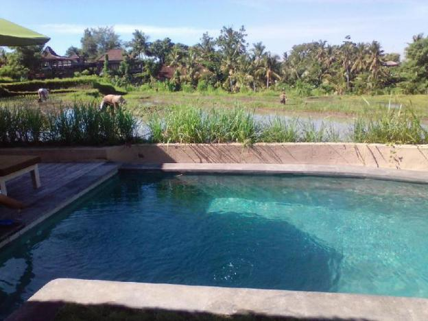 Best Rice Field View Villa at Ubud 1BR