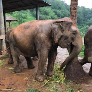 walk with the elephants & return to your cottage บังกะโล 1 ห้องนอน 1 ห้องน้ำส่วนตัว ขนาด 64 ตร.ม. – เขตเมืองเก่า